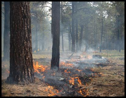 Photo credit: John Baily, Fire Ecologist, College of Forestry, Oregon State University.