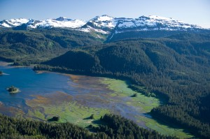 The Tongass Rainforest (photo credit: John Hyde for Sierra Club)