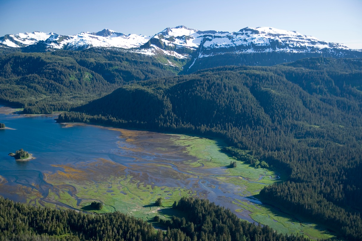 Image result for Tongass rainforest