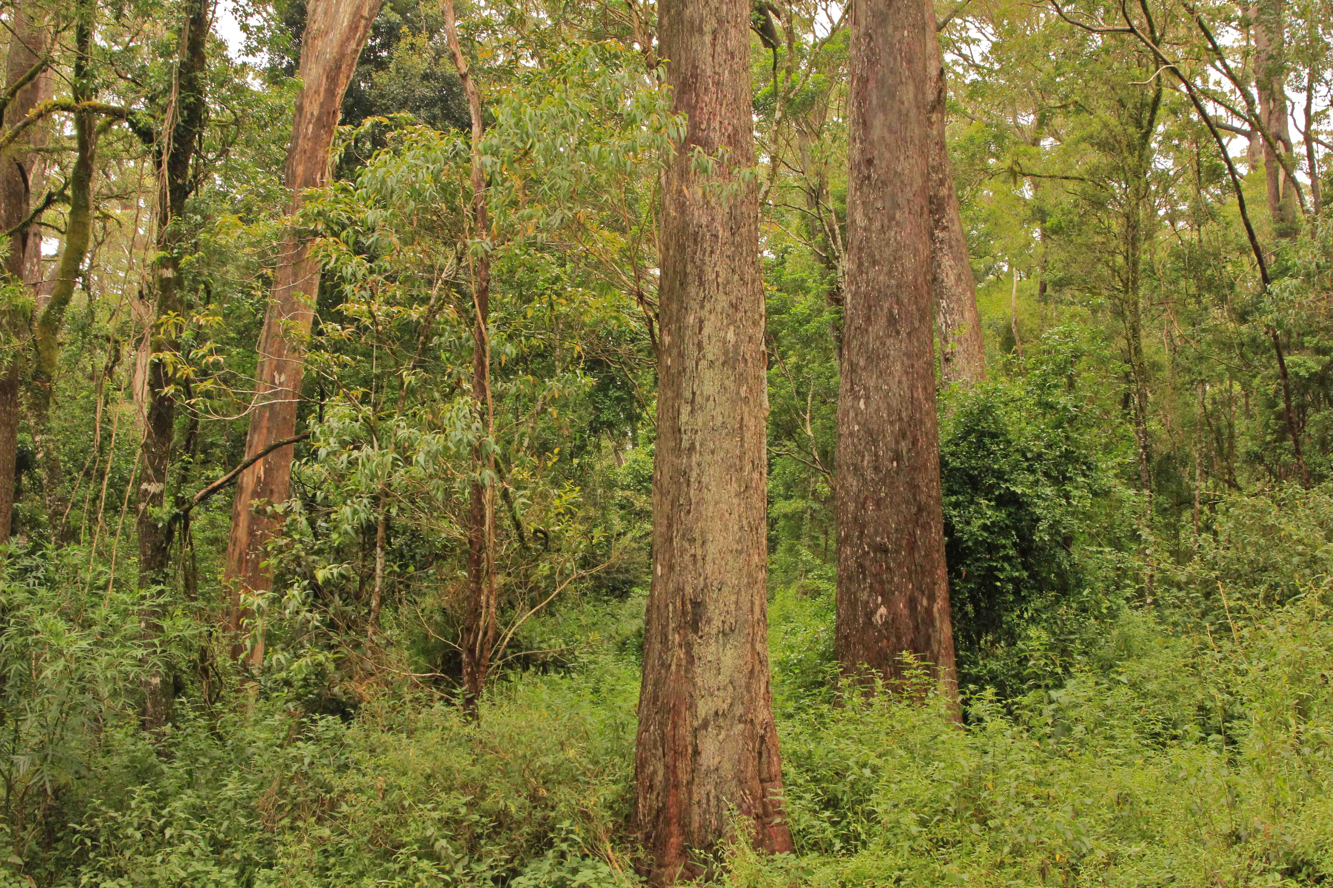 Temperate Rainforests Down Under Owe Existence To Ancient Ark