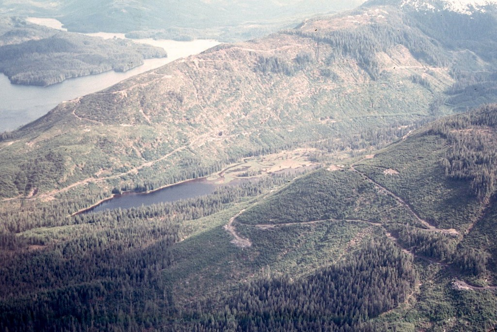 Logging on the Tongass rainforest releases vast amounts of CO2 as a global warming pollutant