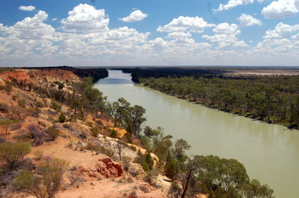 The Murray River near Renmark, Australia. (Photograph by Brian Richter)