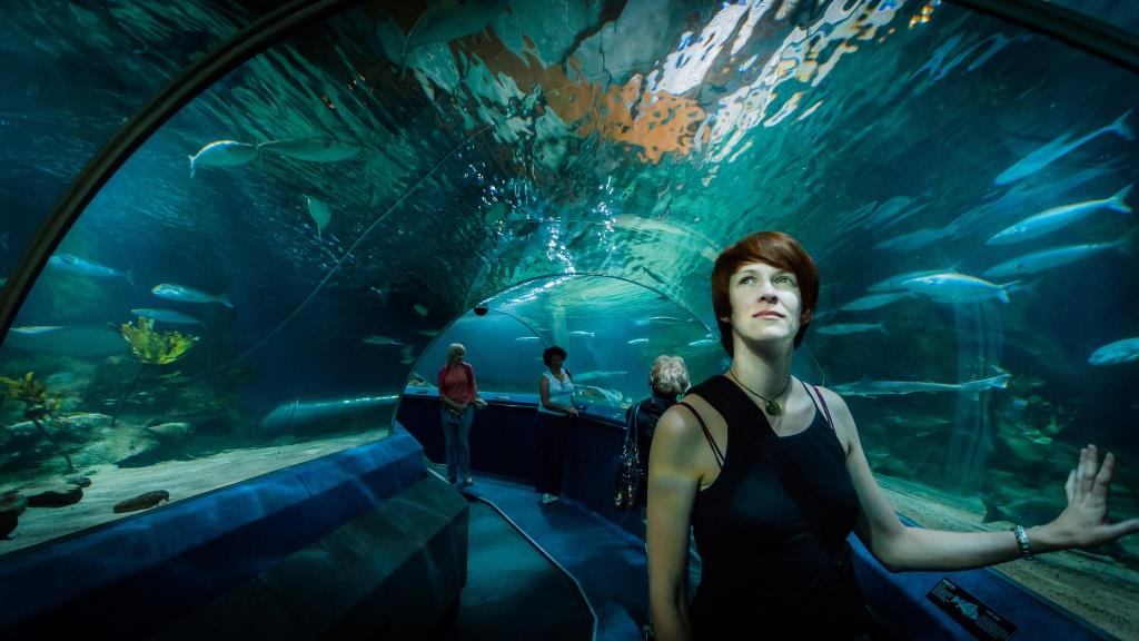 The National Aquarium of New Zealand in Napier, New Zealand. Photo by ...