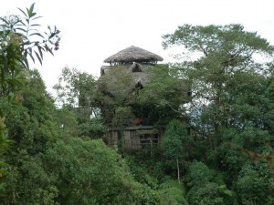 A unique hotel in Ecuadorian rainforest