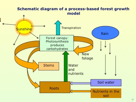 Simplified diagram of a process-based model of forest growth. Sunshine drives photosynthesis. To function well the leaves need water and nutrients from the soil. The (carbon) products of photosynthesis are distributed to the various parts of the trees. Water is lost by transpiration.