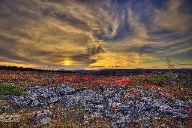 Dolly Sods Wilderness in West Virginia. Photo by Kim Seng, used under Creative Commons licensing.