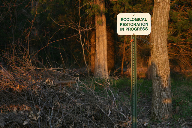 Ecological restoration in progress—but why? Photo by Quinn Dombrowski, used under Creative Commons licensing.