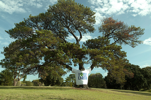 This tree thinks you should vote. Photo by Earth Hour, used under Creative Commons licensing.