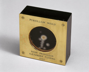A sample of penicillin mold presented by Alexander Fleming in 1935. Photo by the Science Museum of London, used under Creative Commons licensing.