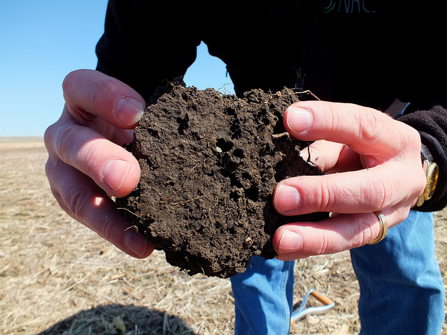 Healthy soil is home to numerous organisms. Photo by Colette Kessler, USDA Natural Resources Conservation Service, South Dakota , used under Creative Commons licensing.