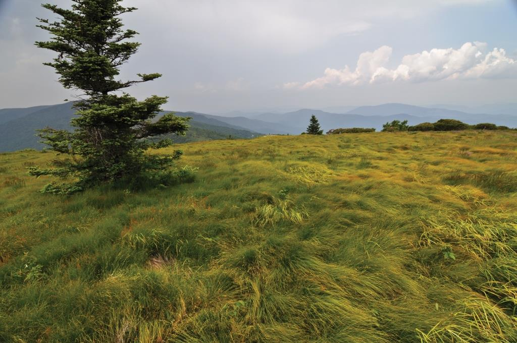 A grassy bald on Roan Mountain, on the Tennesse-North Carolina border.