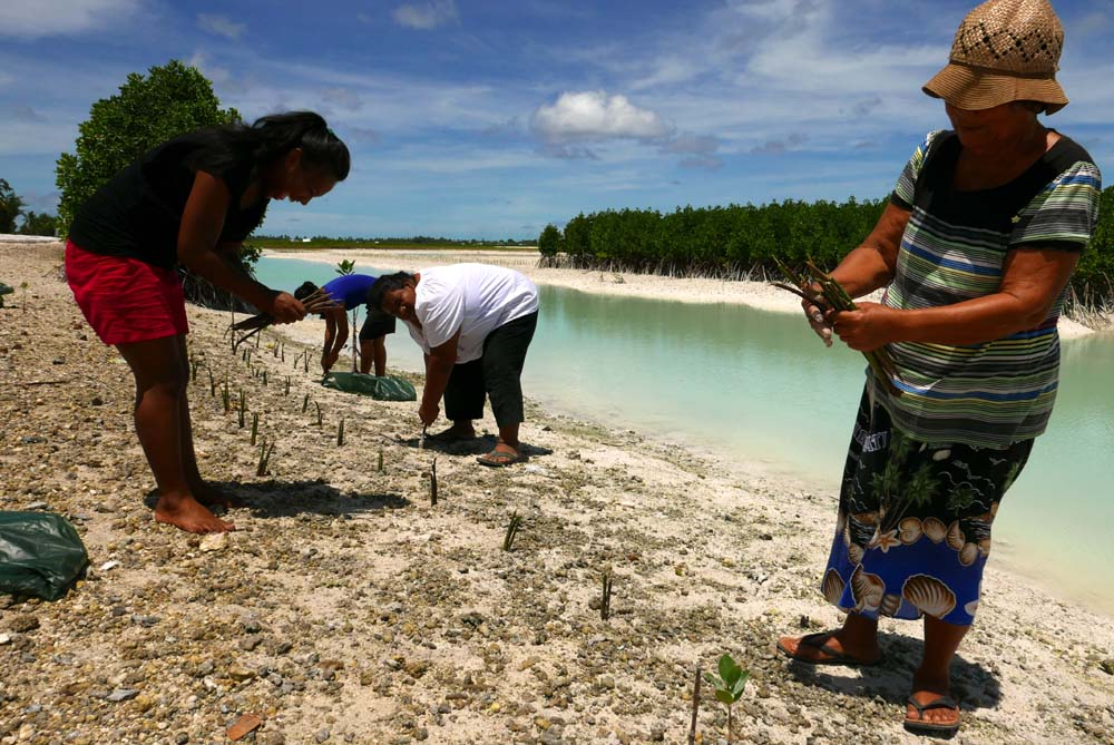 Mangrove planting in Kiribati. Photo by Kennedy Warne.