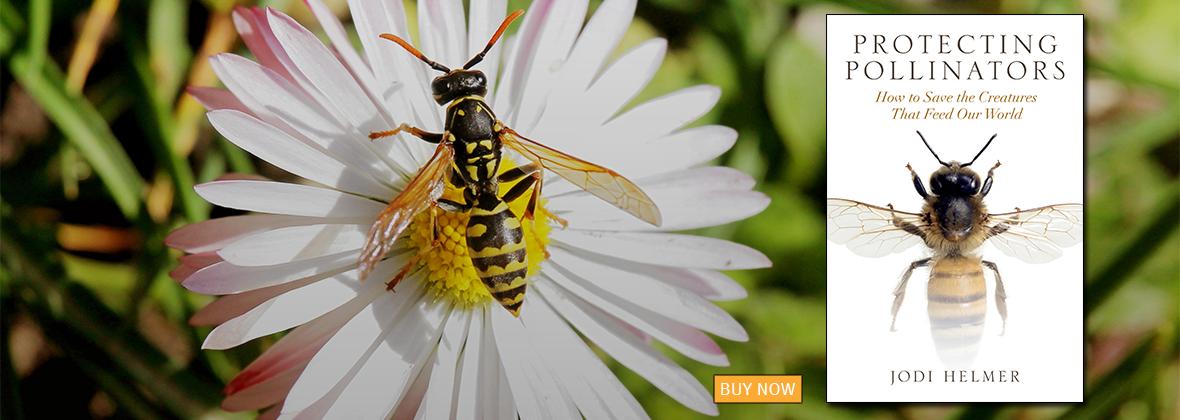 Protecting Pollinators by Jodi Helmer | An Island Press book
