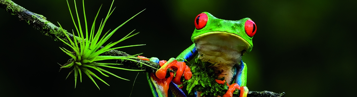 A colorful frog on a branch. Photo by Thomas Marent.