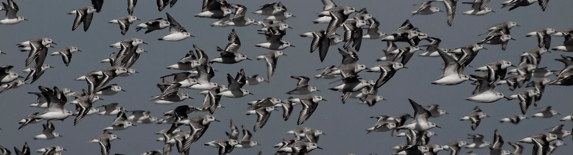Photo credit: Flock/bandada by Flickr.com user Rafael Edwards