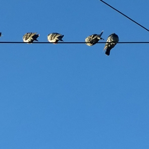 Photo Credit: Birds on a Wire by Flickr.com user Kiwi Flickr