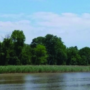 Image of the Anacostia River by ThienVinh Nguyen