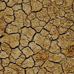 Dry land. Photo by Dan Gold/Unsplash