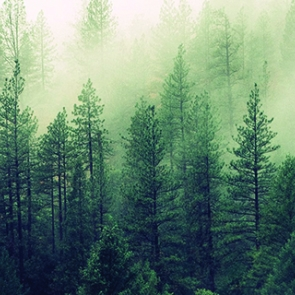 Layered pine trees with fog. Photo by Jay Mantri/Unsplash