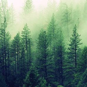 Layered pine trees with fog. Photo by Jay Mantri/Unsplash