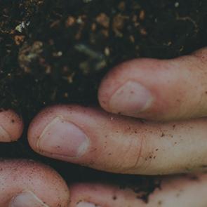 Hands holding a sapling with soil. Photo by Kyle Ellefson/Unsplash