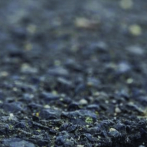 A flower in asphalt