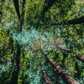 Trees, photo by Casey Horner/Unsplash